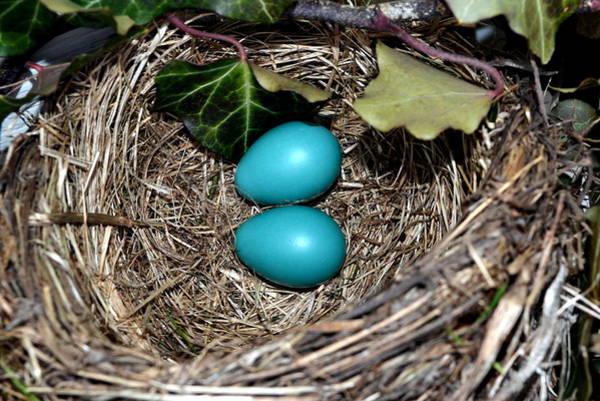 Robin Egg Blue Photograph - Easter Eggs by Michelle Calkins