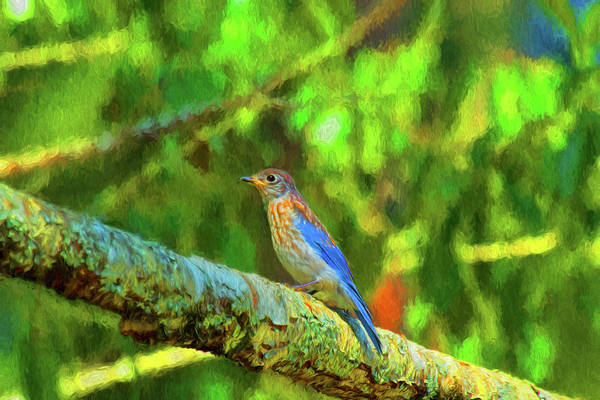 Photograph - Eastern Blue Bird With Flair by Kay Brewer