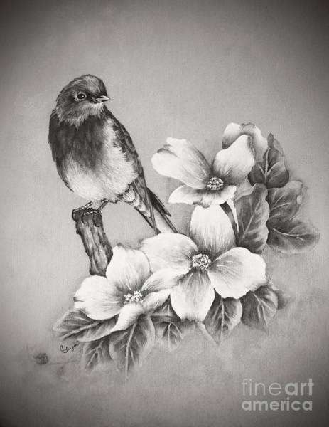 Eastern Bluebird Painting - Eastern Bluebird And Dogwood - Black And White by Cindy Treger