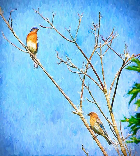 Eastern Bluebird Couple Art Print