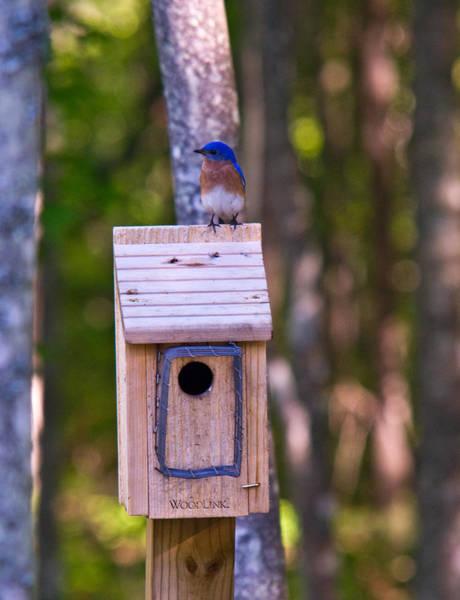 Crossville Wall Art - Photograph - Eastern Bluebird Perched On Birdhouse 4 by Douglas Barnett