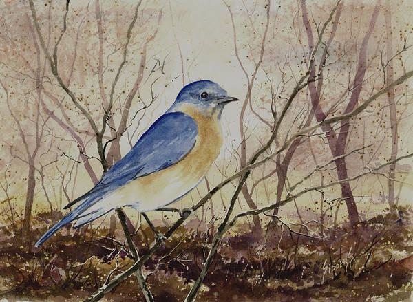 Painting - Eastern Bluebird by Sam Sidders