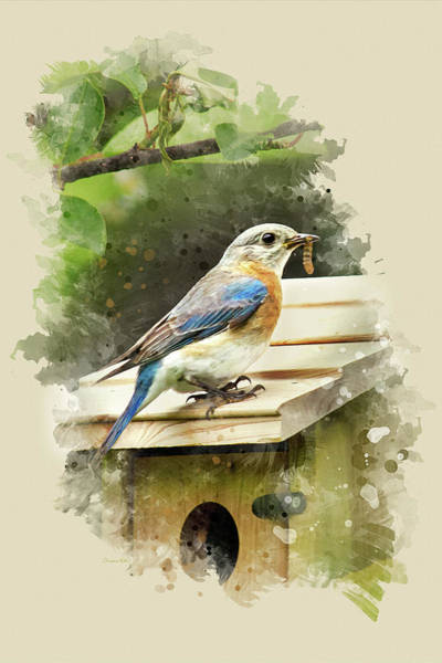 Mixed Media - Eastern Bluebird Watercolor Art by Christina Rollo