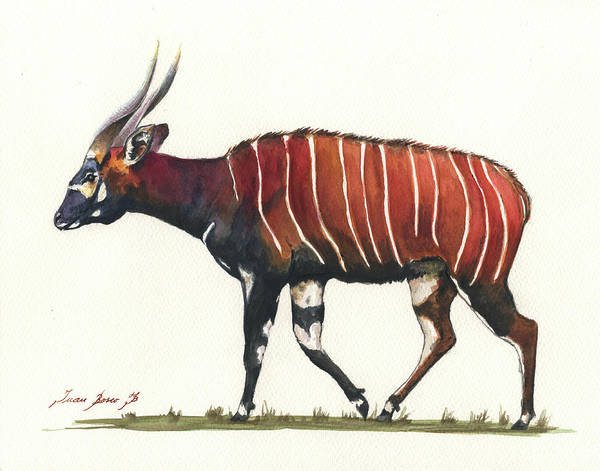 Antelope Wall Art - Painting - Eastern Bongo  by Juan Bosco