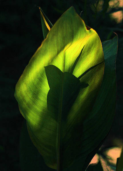 Photograph - Eastern Light On Leaf by Viktor Savchenko