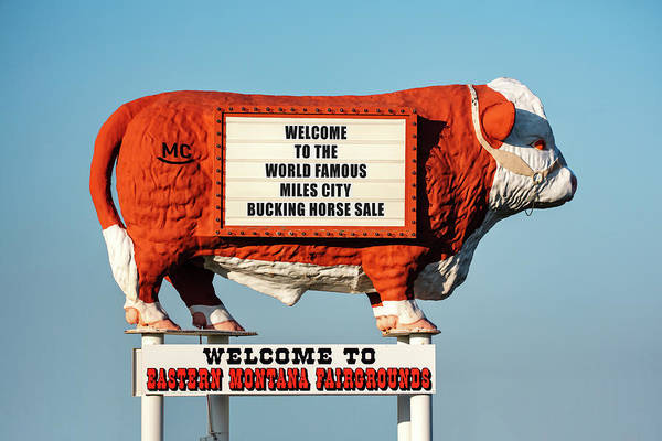 Wall Art - Photograph - Fairgrounds Cow by Todd Klassy