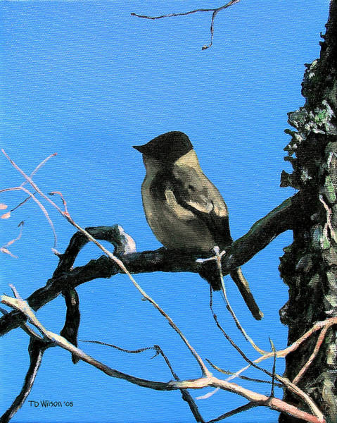 Painting - Eastern Phoebe Dreams by TD Wilson
