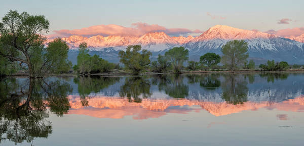 Photograph - Eastern Sierra Reflections by Loree Johnson