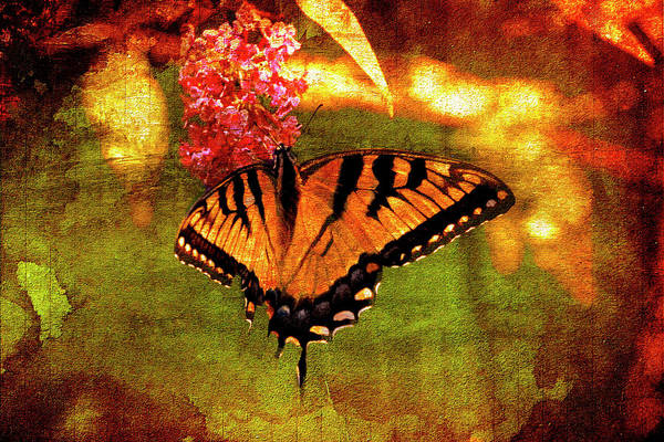 Photograph - eastern Tiger swallowtail butterfly. by Rusty R Smith