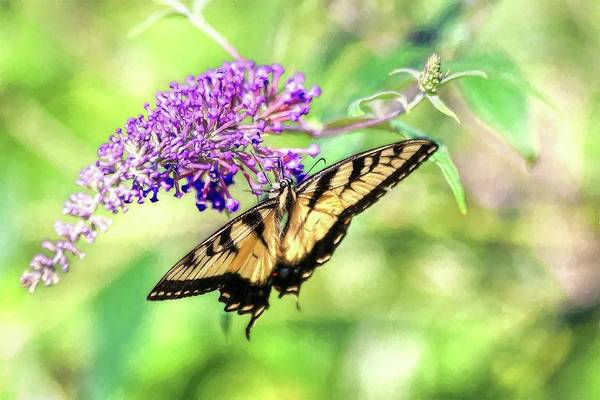 Photograph - Eastern Tiger Swallowtail Painting by Carol Montoya