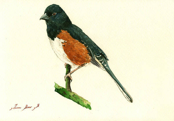 Small Painting - Eastern Towhee Bird by Juan  Bosco