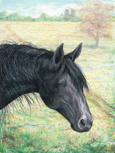 Pastel - Ebony by Sheri Jo Posselt