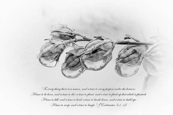 Ecclesiastes 3 Art Print