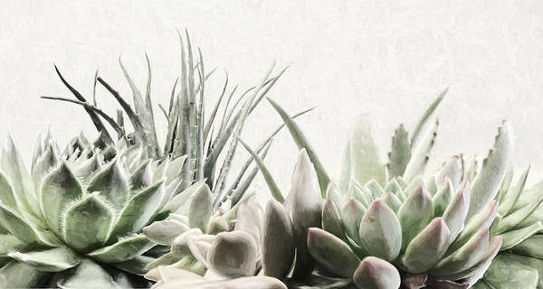 Impression Mixed Media - Echeveria by Lori Deiter