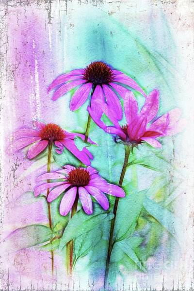 Wall Art - Digital Art - Echinacea - A05cc by Variance Collections