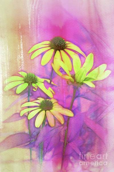 Wall Art - Digital Art - Echinacea - A12t3c9 by Variance Collections