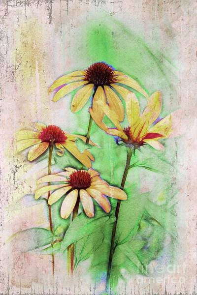 Wall Art - Digital Art - Echinacea - A56 by Variance Collections