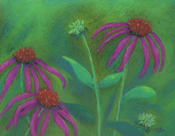 Pastel - Echinacea by Anne Katzeff