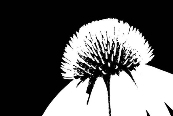 Photograph - Echinacea Bw by Ivan Slosar