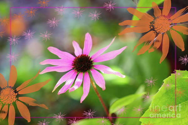 Digital Art - Echinacea Scatter by Donna L Munro