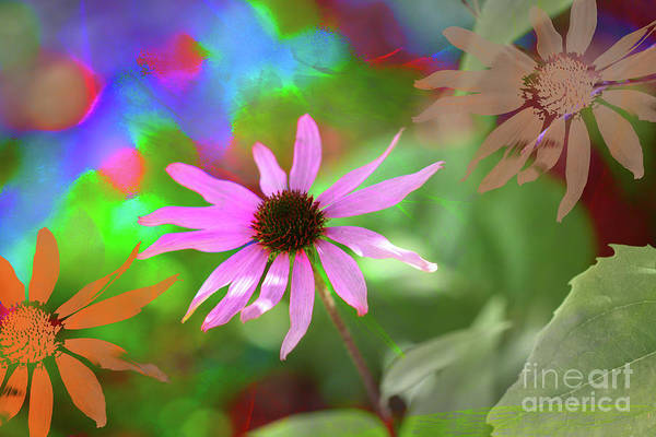 Digital Art - Echinacea Stamp by Donna L Munro