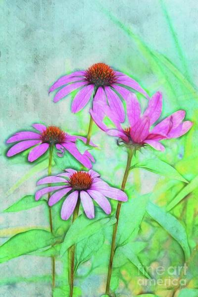 Wall Art - Photograph - Echinacea - A01t5a by Variance Collections