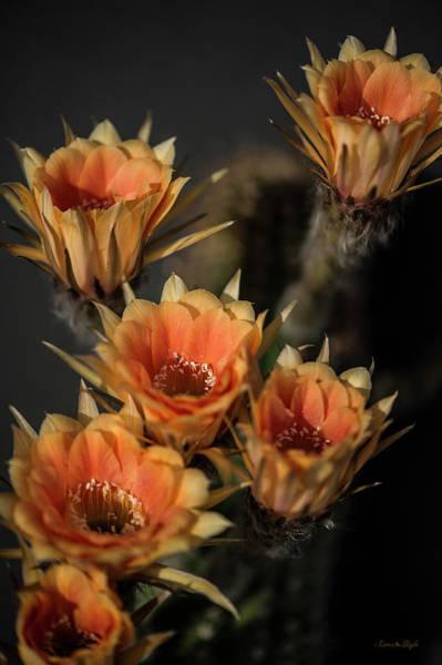 Photograph - Echinopsis by Karen Slagle