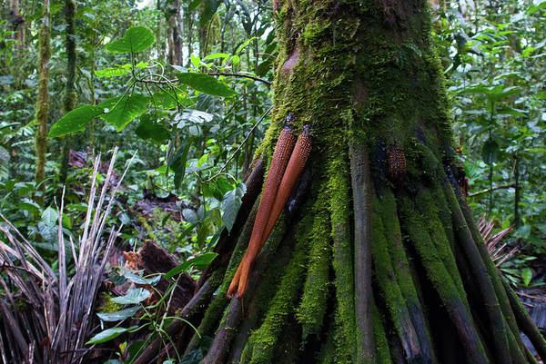 Photograph - Ecuador Forest Detail by Cascade Colors