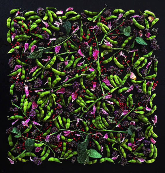 Photograph - Edamame Patterns by Sarah Phillips