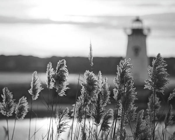 Photograph - Edgartown Ma Lighthouse At Sunrise Martha's Vineyard Cape Cod Reeds Black And White by Toby McGuire