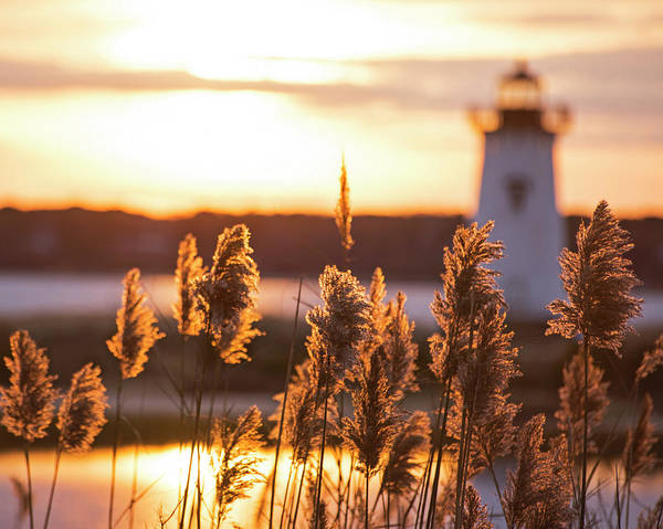Photograph - Edgartown Ma Lighthouse At Sunrise Martha's Vineyard Cape Cod Reeds by Toby McGuire
