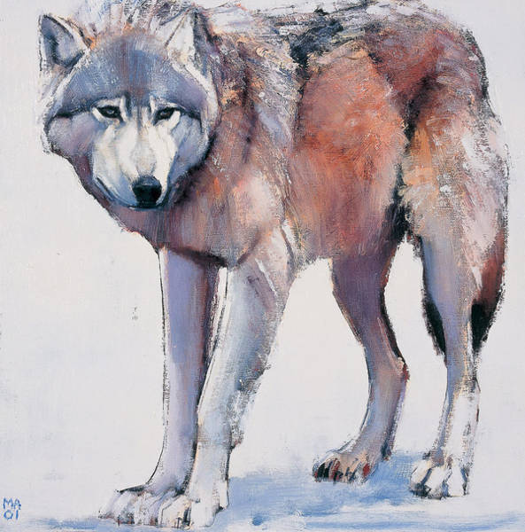 Canis Lupus Wall Art - Painting - Edge by Mark Adlington