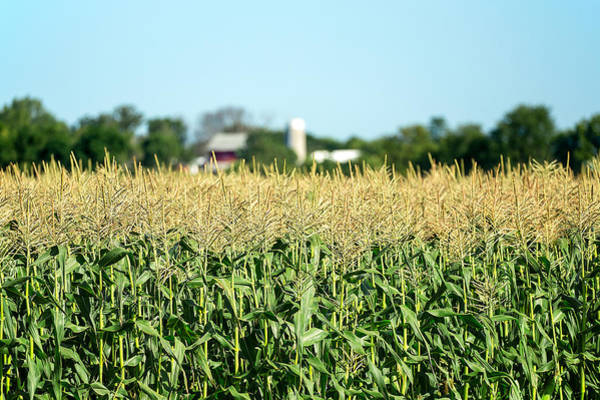 Photograph - Edge Of Field Of Corn by Todd Klassy