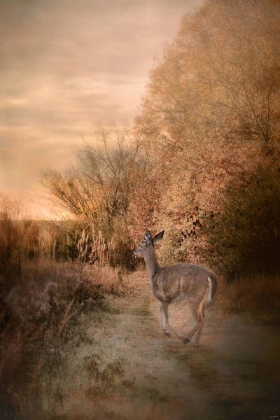Photograph - Edge Of The Forest by Jai Johnson