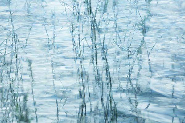 Photograph - Edge Of The Lake by Deborah Hughes