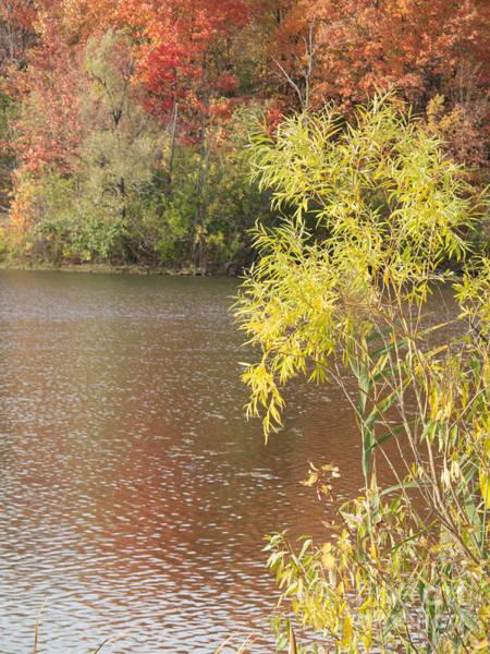 Livonia Photograph - Edges Of Autumn by Ann Horn