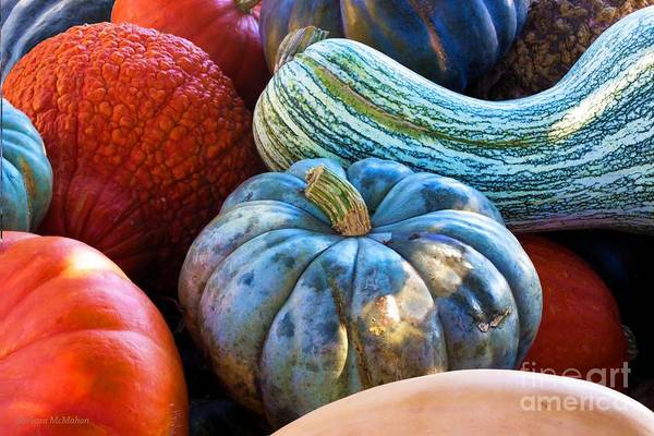 Acorn Squash Photograph - Edible Autumn Shapes by Barbara McMahon
