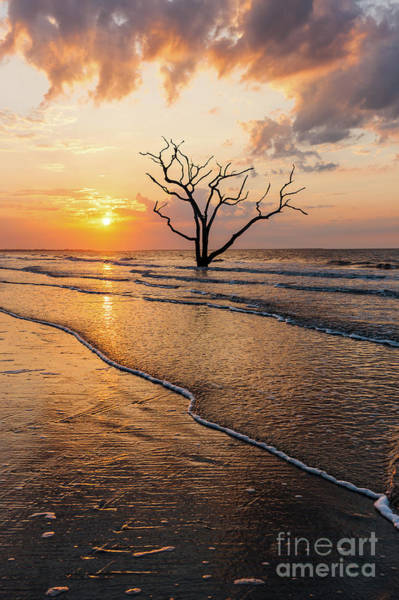 Photograph - Edisto Island Sunrise Vii by Clarence Holmes