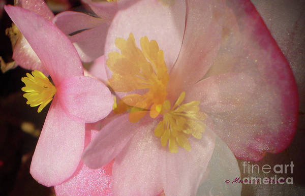 Photograph - Effects Photo 3 by Monica C Stovall