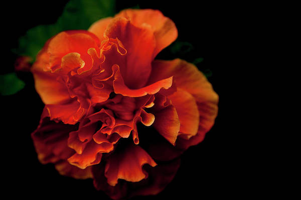 Photograph - Efflorescence by Eric Christopher Jackson