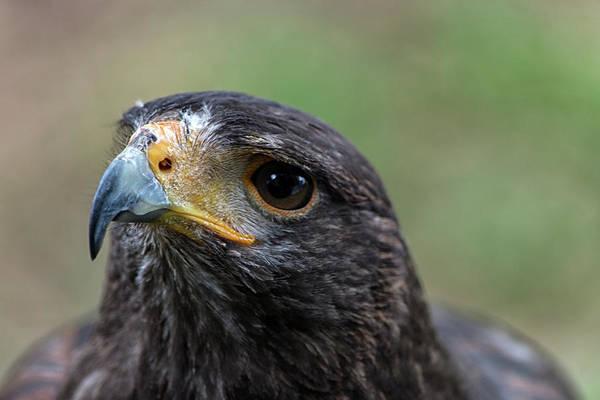 Photograph - Egale Face by Cliff Norton