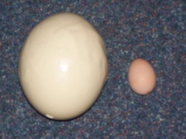 Wall Art - Photograph - Eggs 3 by Jesse Gray