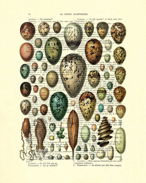 Rustic Digital Art - Eggs Collection by Madame Memento