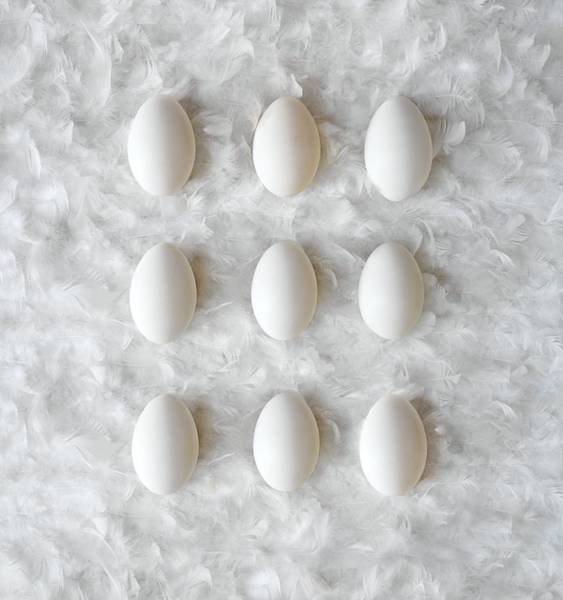 Wall Art - Photograph - Eggs On Feathers, Conceptual Image by Paul Biddle