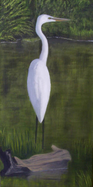 Water Foul Painting - Egret In A Pond by John Marcum