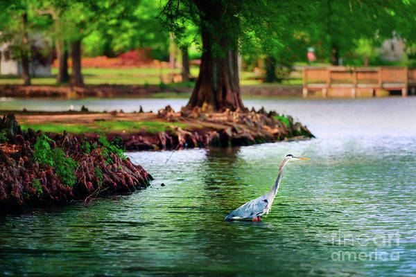 Honor Heights Park Photograph - Heron At Honor Heights by Tamyra Ayles