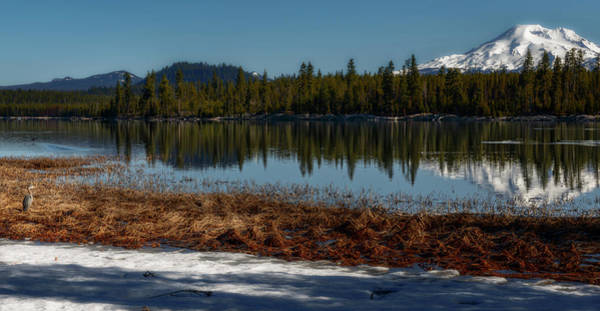 Wall Art - Photograph - Egret At Lava Lake by Cat Connor