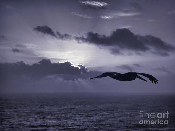 Photograph - Pelican At Sunrise by Jeff Breiman