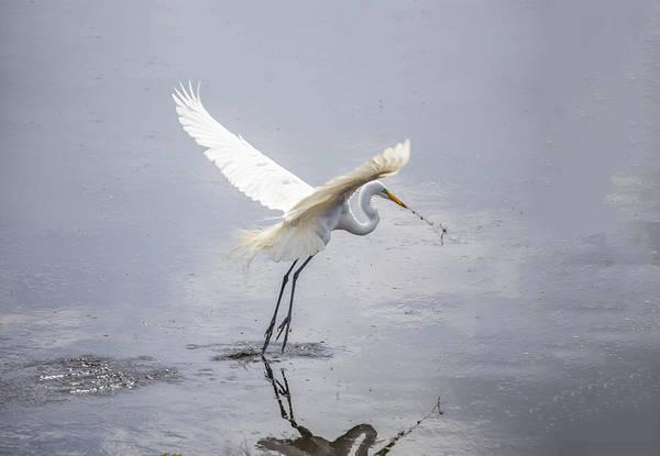 Photograph - Egret Ballet 04 by Jim Dollar