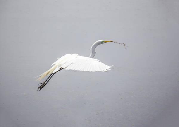 Photograph - Egret Ballet 07 by Jim Dollar